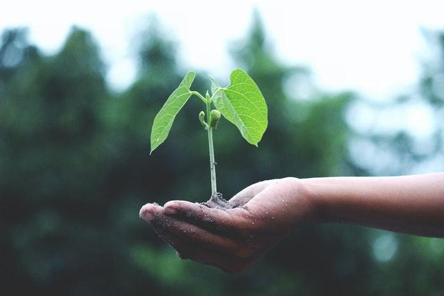 freelancing in Pakistan growth